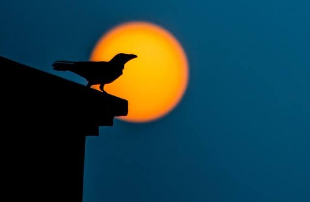 Silhouette d'un corbeau la nuit dans une ville