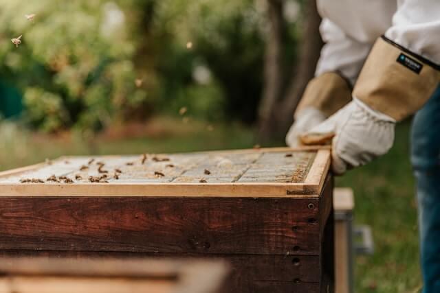 Gants de protection pour éviter les piqûres d'abeilles, guêpes et frelons