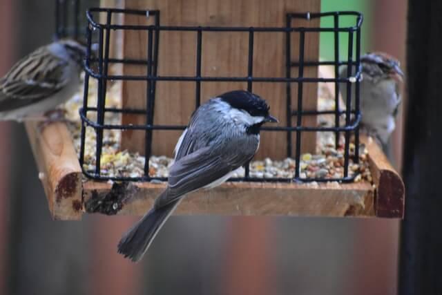 Mangeoire anti-pigeons pour petits oiseaux