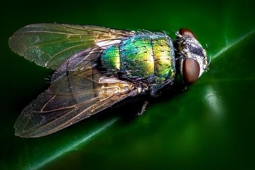 Mouche verte posée sur une plante d'intérieur