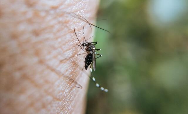 Moustique en train de piquer une peau blanche