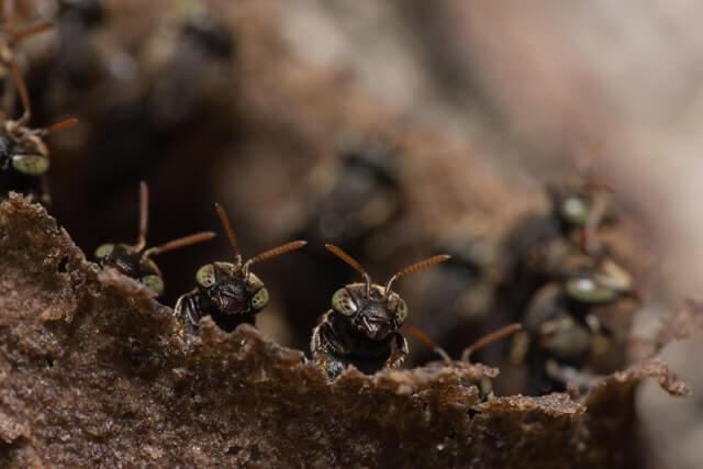Nid de guêpes enterré : comment le détruire sans danger ?