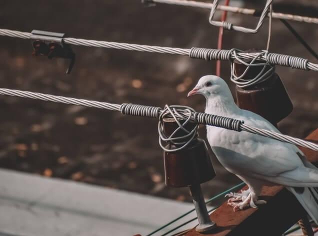 Pigeon posé sur un toit à proximité d'une antenne TV
