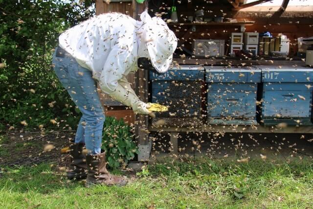 Apiculteur au milieu d'un essaim d'abeilles