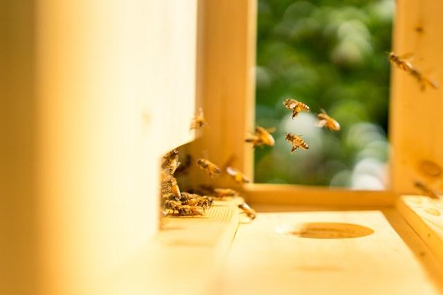 Abeilles qui se rapprochent de la ruche