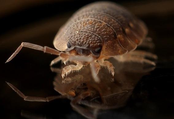 Punaises de lit : zoom sur ses insectes qui aiment proliférer dans notre literie