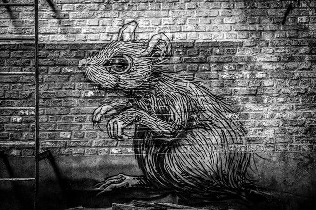 Tag de rat gris sur un mur de pierres
